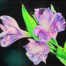Peruvian lily by lanadi