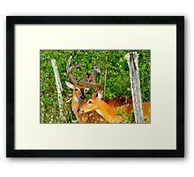Doormen for the Boys Only Thicket Club Framed Print