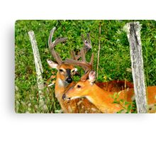 Doormen for the Boys Only Thicket Club Canvas Print