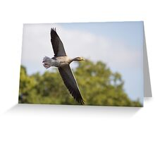 Greylag Goose Greeting Card
