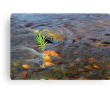 River Tees Willow Weeping Canvas Print