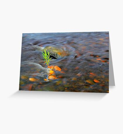 River Tees Willow Weeping Greeting Card