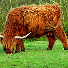 Highland Beastie Mother by Kirsty Auld