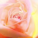 Simple Rose by Kirsty Auld