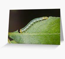 Sawfly Larva Greeting Card
