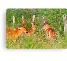 The Boys Only Thicket Club Metal Print