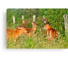 The Boys Only Thicket Club Canvas Print