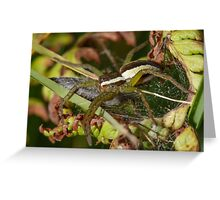 Raft Spider Greeting Card
