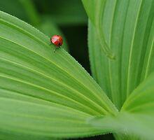 Lady Bug  by JennaKnight