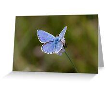 Adonis Blue Greeting Card