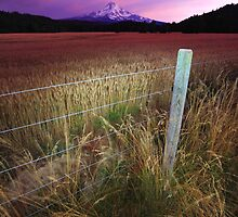 Above the Fruited Plain II by Tula Top