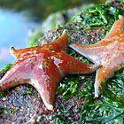 Star Fish by JennaKnight
