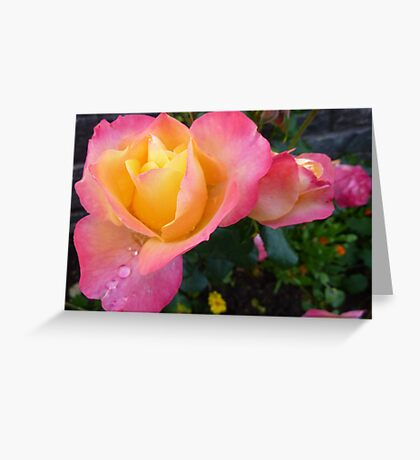 Pink And Yellow Beauty Greeting Card