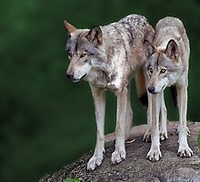 If you call one wolf, you invite the pack by John44