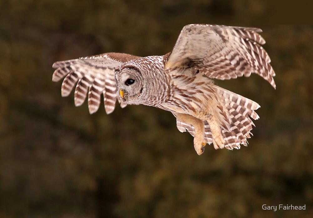 Barred Owl In Flight II by Gary Fairhead