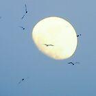 Midnight Flight by Barbara Gerstner