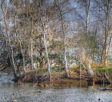 Tree Island by Savannah Gibbs