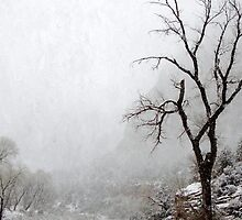 Zion Snowstorm by Annie Adkins