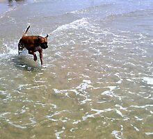 boxer bouncing waves by rubbleh
