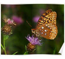 Great Spangled Fritillary Feeding Poster