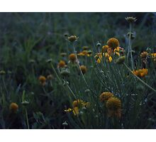 Grouped Together Photographic Print