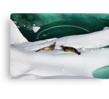 Antarctic seals Canvas Print