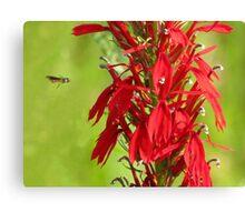 Flight Of A Thread Waisted Wasp  Canvas Print