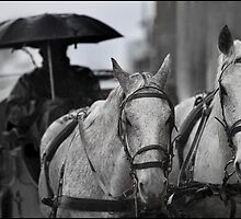 Horses & Carriage 7 by John Van-Den-Broeke
