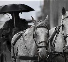 Horses & Carriage 7 by John Van-Den-Broeke