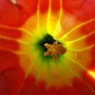 Trumpet flower by Matthew Walmsley-Sims