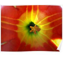 Trumpet flower Poster