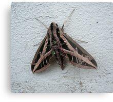 Sphinx Moth After Rain Metal Print