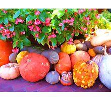 """Pumpkin Patch"" Photographic Print"