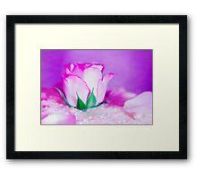 Fleur VII Framed Print