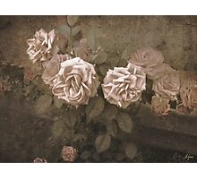 Old Pink Photographic Print