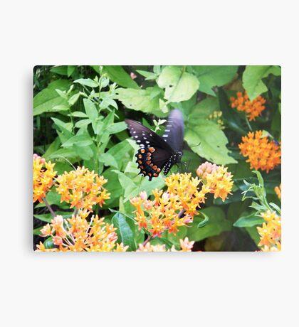 Butterfly at Point Pelee, Ontario Metal Print