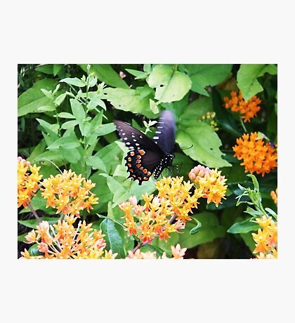 Butterfly at Point Pelee, Ontario Photographic Print