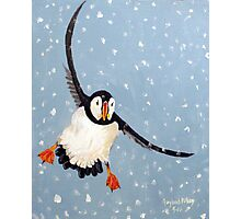 """Playful Puffin"" Photographic Print"