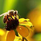 Bee and Bokeh by KatsEyePhoto