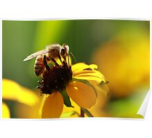 Bee and Bokeh Poster