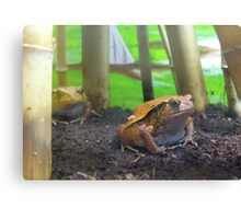 Frogs Canvas Print