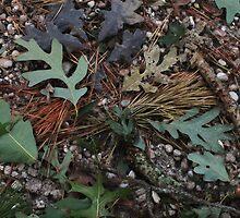 Pine Barrens Microcosm by RVogler