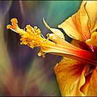 hibiscus by Helenvandy
