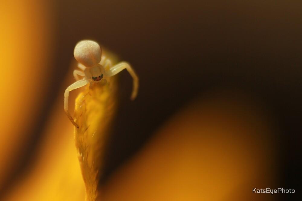 Spider on Petal by KatsEyePhoto