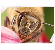 A bee close up Poster