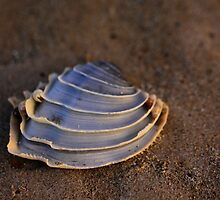 Seashell by ClaireBear