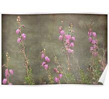 A melody of soft pink Irish Heath Poster