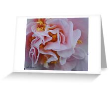 Camelia Japonica Greeting Card