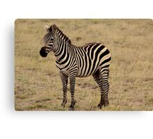Africa Continues - Stripey Perfection Canvas Print
