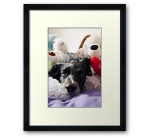 Dog toys Framed Print